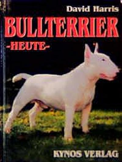 Bull Terrier, Heute