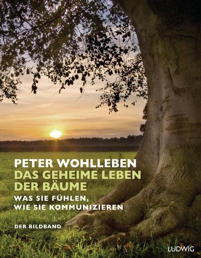 Das geheime Leben der Bäume: Was sie fühlen, wie sie kommunizieren. Der Bildband