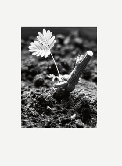 Peter Piller präsentiert 'Altern als Problem für Künstler' (Edition Ex Libris)