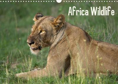 Africa Wildlife (Posterbuch DIN A4 quer)