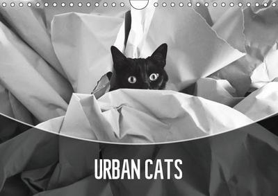 Urban Cats (Wall Calendar 2019 DIN A4 Landscape)