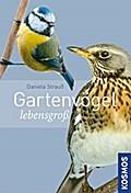 Gartenvögel lebensgroß