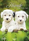 Hunde 2019 Kalender