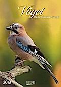 Vögel 2019 Kalender