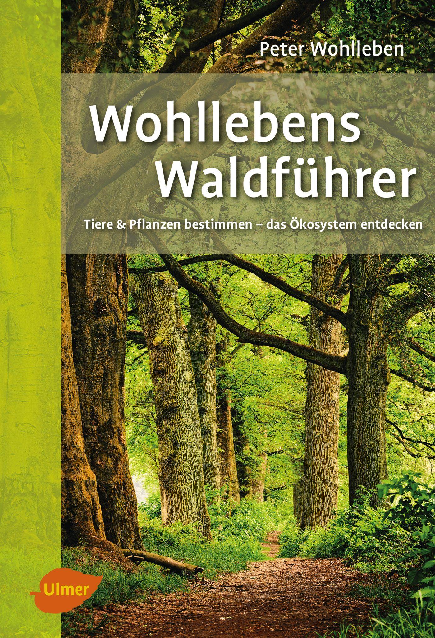 Peter Wohlleben : Wohllebens Waldführer : 9783800103218