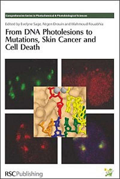 From DNA Photolesions to Mutations, Skin Cancer and Cell Death
