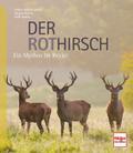 Der Rothirsch: Ein Mythos im Revier