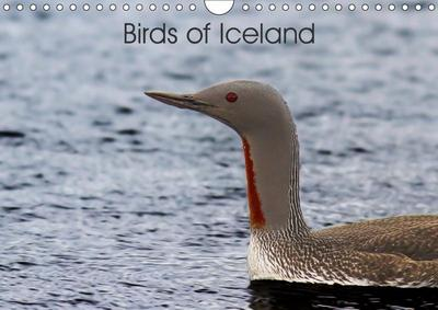 Birds of Iceland (Wall Calendar 2019 DIN A4 Landscape)