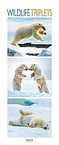 Wildlife Triplets 2018 PhotoArt Vertikal Kalender