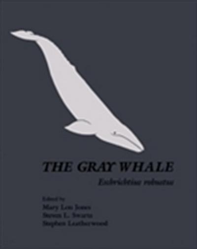 Gray Whale: Eschrichtius Robustus