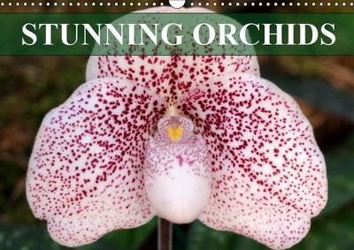 Stunning Orchids (Wall Calendar 2019 DIN A3 Landscape)