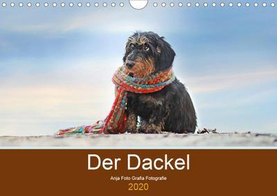 Der Dackel (Wandkalender 2020 DIN A4 quer)