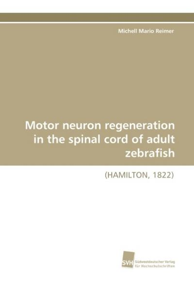 Motor neuron regeneration in the spinal cord of adult zebrafish
