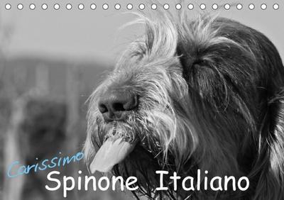 Carissimo Spinone Italiano (Tischkalender 2018 DIN A5 quer)