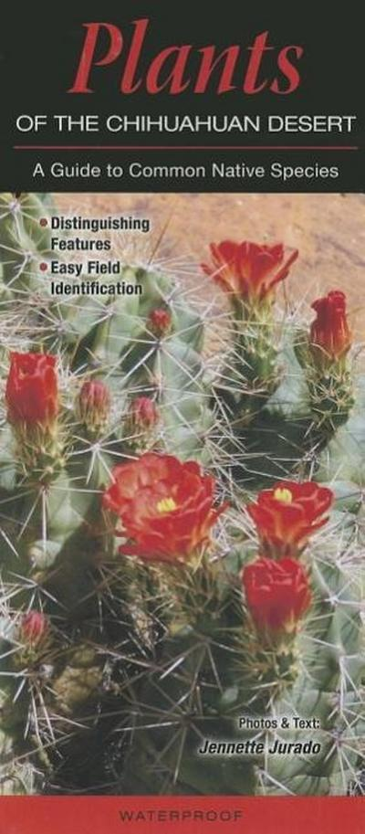 Plants of the Chihuahuan Desert: A Guide to Common Native Species