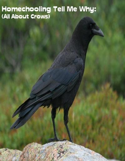 Homeschooling Tell Me Why:  (All About Crows)