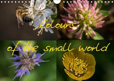 Colours of the small world (Wall Calendar 2019 DIN A4 Landscape)