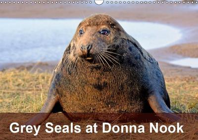 Grey Seals at Donna Nook (Wall Calendar 2019 DIN A3 Landscape)