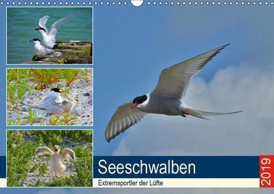 Seeschwalben - Extremsportler der Lüfte (Wandkalender 2019 DIN A3 quer)
