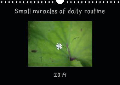Small miracles of daily routine (Wall Calendar 2019 DIN A4 Landscape)