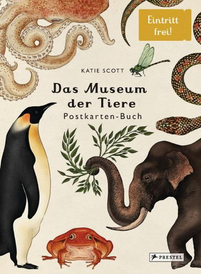 Das Museum der Tiere. Postkartenbuch