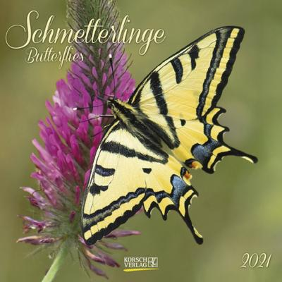 Schmetterlinge 2021