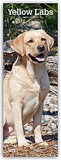 Yellow Labrador Retrievers - Gelbe Labradore 2019