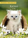 Katzen 2018 Foto-Wochenkalender