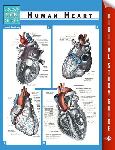 Human Heart (Speedy Study Guides)
