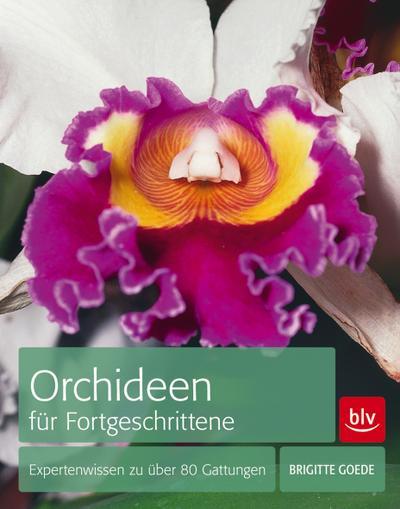 Orchideen für Fortgeschrittene; Expertenwissen zu über 80 Gattungen   ; Deutsch; 168 farb. Abb. 5 Ill. -