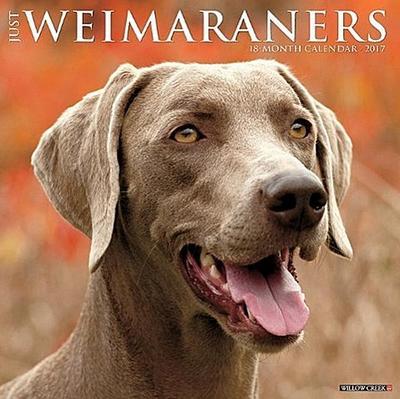 Just Weimaraners