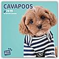 Cavapoos 2019 - 18-Monatskalender