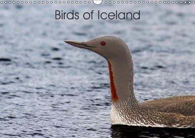 Birds of Iceland (Wall Calendar 2019 DIN A3 Landscape)