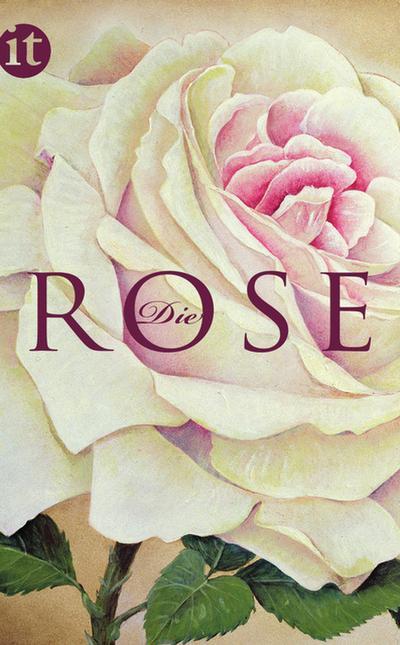 Die Rose (insel taschenbuch)