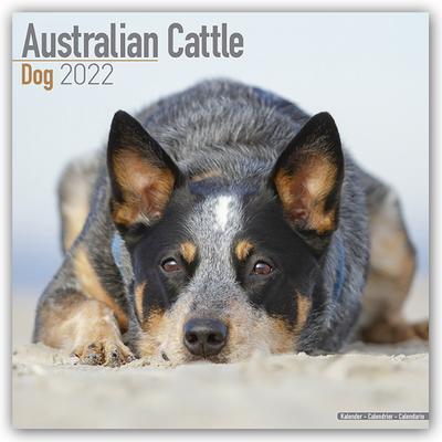 Australian Cattle Dogs - Australische Cattle Dogs 2022 - 18-Monatskalender mit freier DogDays-App