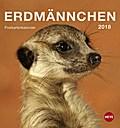 Erdmännchen 2018 Postkartenkalender