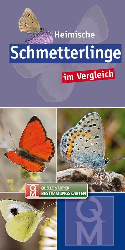 Heimische Schmetterlinge im Vergleich
