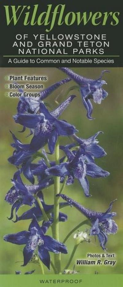 Wildflowers of Yellowstone & Grand Teton National Parks: A Guide to Common & Notable Species