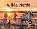 Wilde Pferde 2018