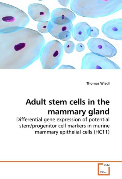 Adult stem cells in the mammary gland