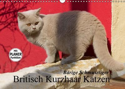 Bärige Schmusetiger - Britisch Kurzhaar Katzen (Wandkalender 2014 DIN A3 quer): Dieser Kalender präsentiert wundervolle Britisch Kurzhaar Katzen in ... 14 Seiten) (CALVENDO Tiere)