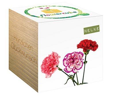 Chic.mic Flowercube Nelke - Chic.Mic - , Deutsch, , Herzlichen Glückwunsch, Herzlichen Glückwunsch