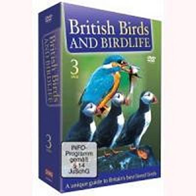 British Birds And Birdlife