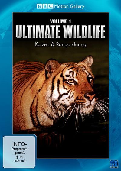 BBC Motion Gallery: Ultimate Wildlife, Vol. 1: Katzen & Rangordnung - KSM Gmbh - DVD, Englisch| Deutsch, Dokumentatio n, Vol. 01 / Katzen & Rangordnung, Vol. 01 / Katzen & Rangordnung