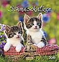 Schmusekatzen 2019. Postkartenkalender