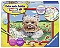 Malen nach Zahlen. Kleiner Yorkshire Terrier