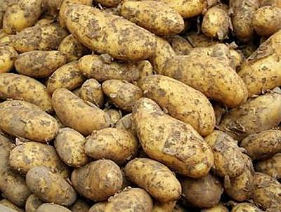 Kartoffeln - 2.000 Teile (Puzzle)