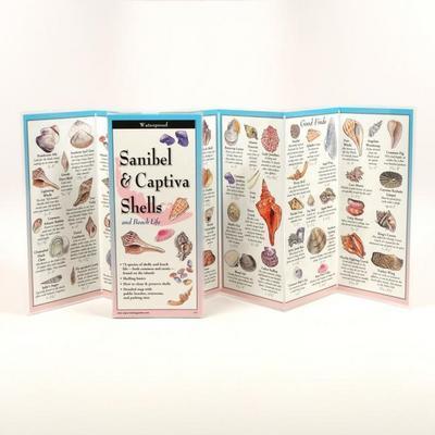 Sanibel & Captiva Shells and Beach Life