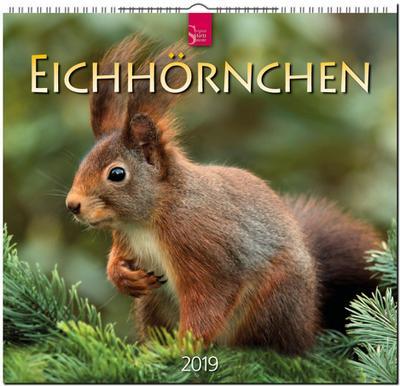 MF-Kalender EICHHÖRNCHEN 2019 - Stürtz - Kalender, Deutsch, , ,
