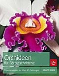 Orchideen für Fortgeschrittene